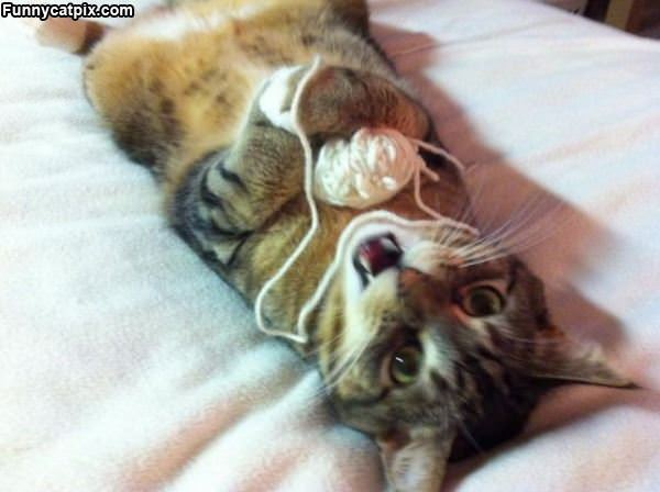 Cute Cat Playing With Yarn