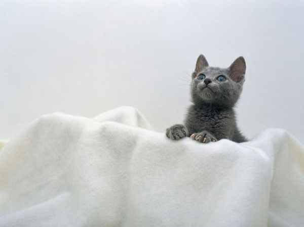 Cute Staring Kitten