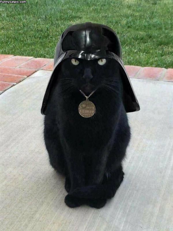Darth Cat