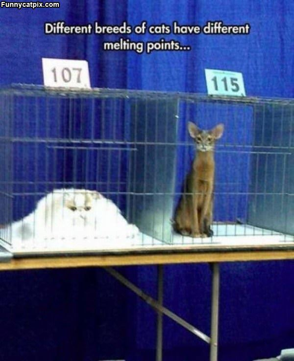 Different Melting Points