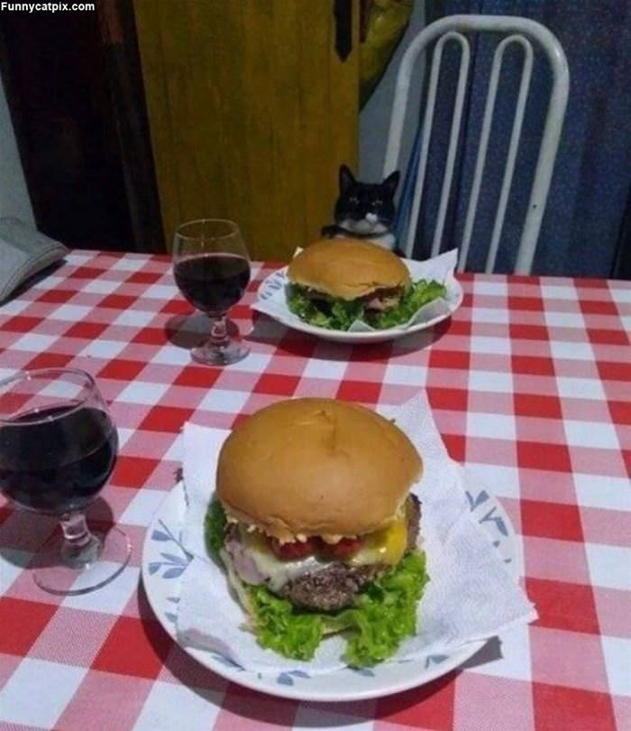 Dinner With A Kitty