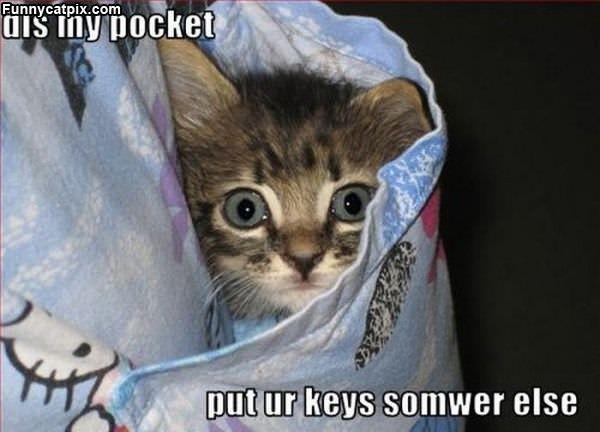 Dis My Pocket