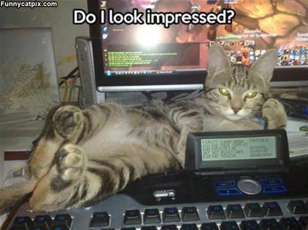 Do I Look Impressed