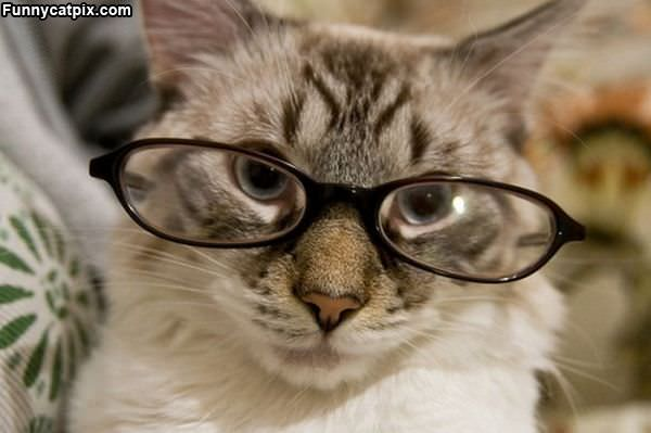 Do I Look Smarter
