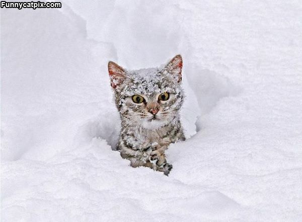 Do Not Like This Snow