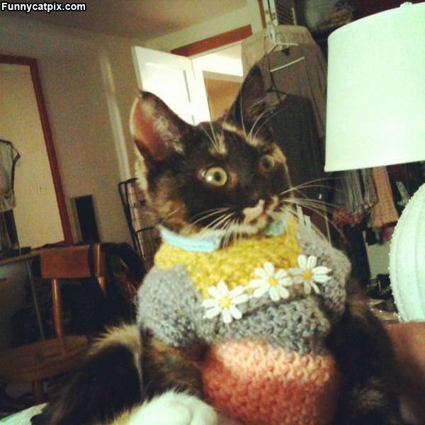 Do You Like My Sweater