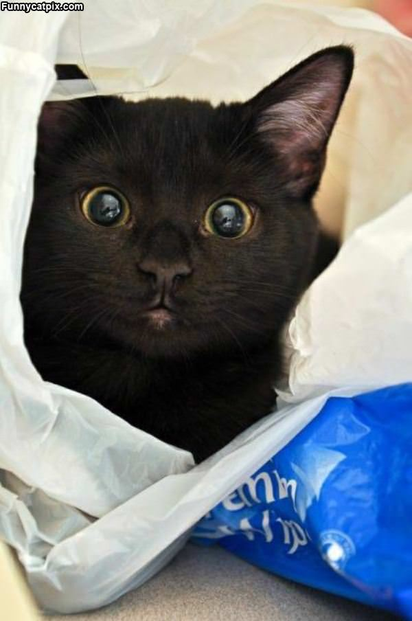 Dont Take My Bag Away