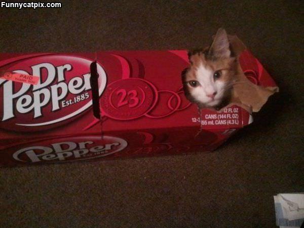 Dr Pepper Cat