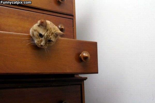 Drawer Cat