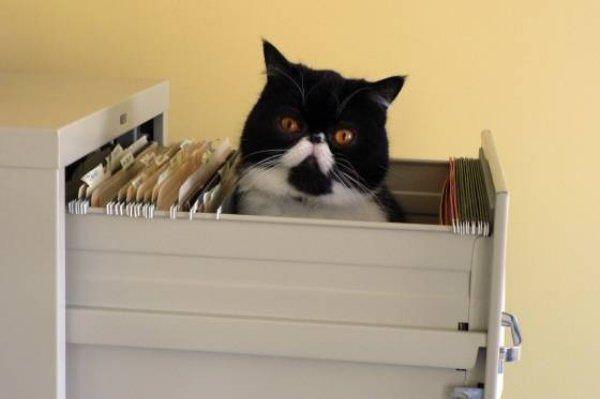 Drawer Of Cat