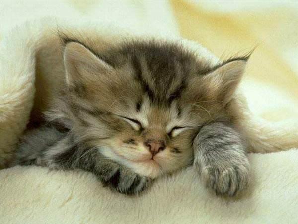 Cat appreciation thread [Archive] - The Apricity Forum: A European