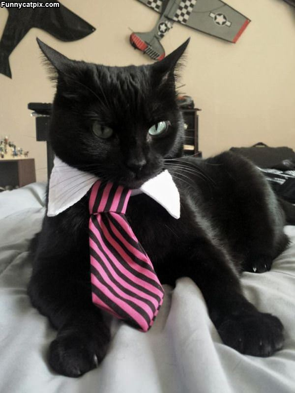 Dressed For The Job