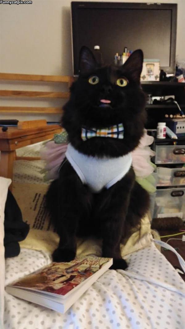 Dressed Up Super Classy