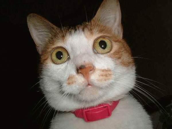 Cat says Duhh