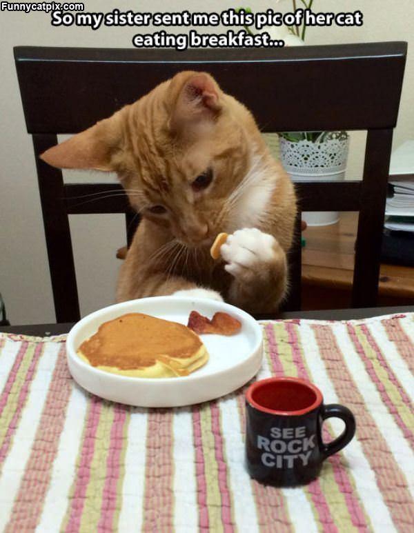 我的早餐 - 雪山 - .