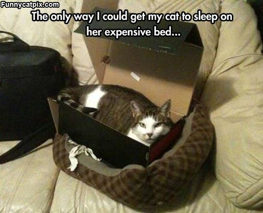 Expensive New Bed