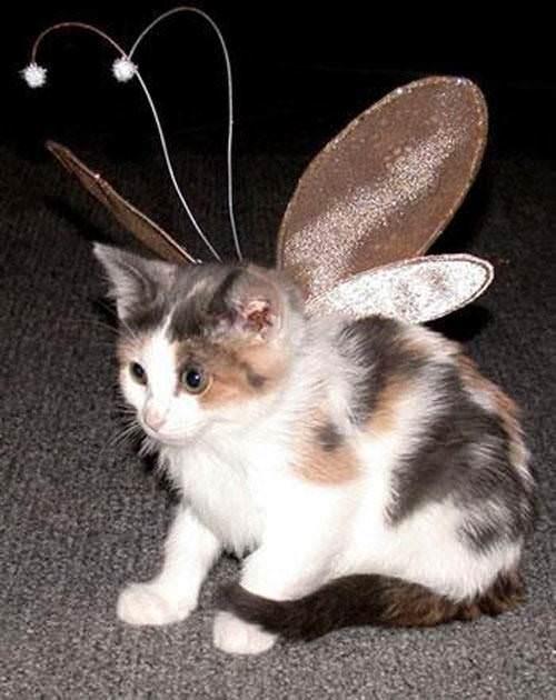 Fairy Kitty