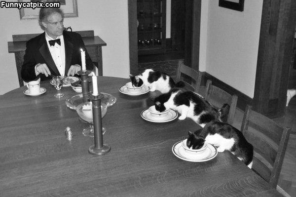 Fancy Feast