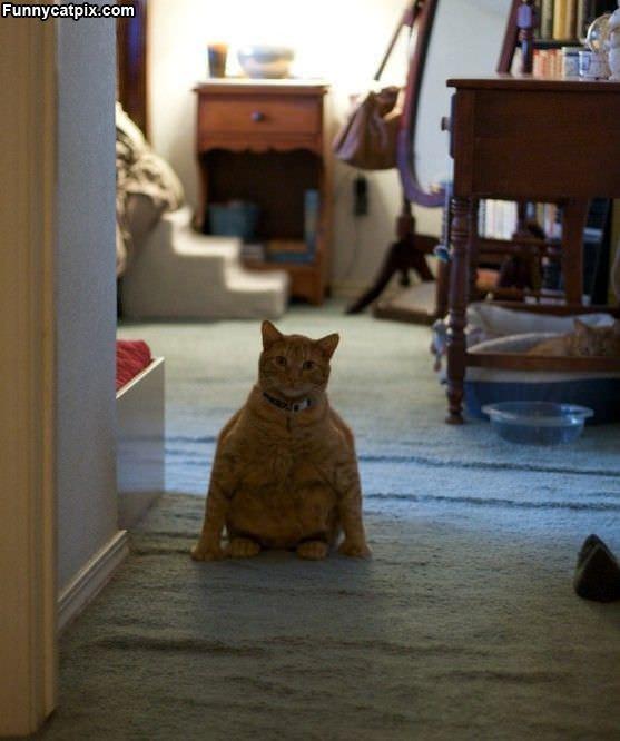 Fatty Cat