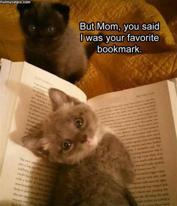 Favorite Bookmark
