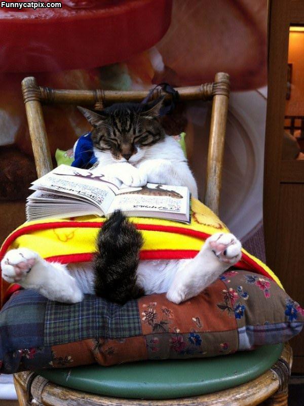 Fell Asleep Reading
