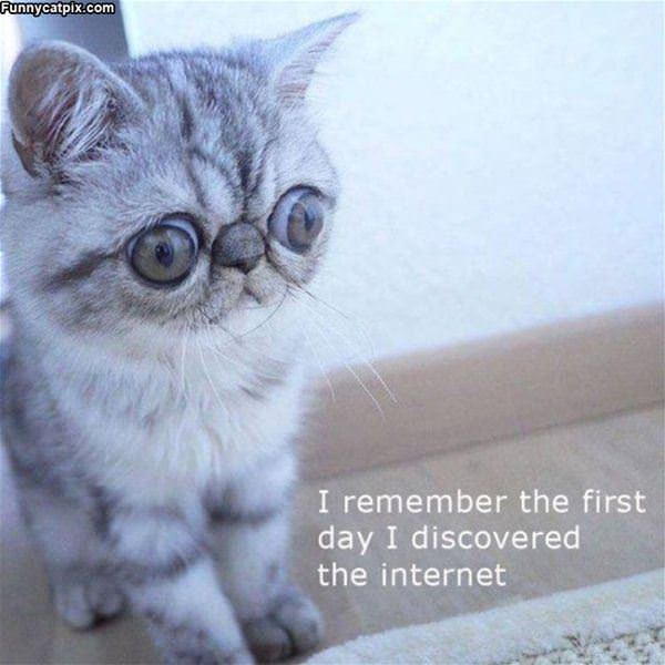 First Day On The Internet