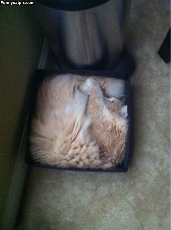 Fit Right In The Box