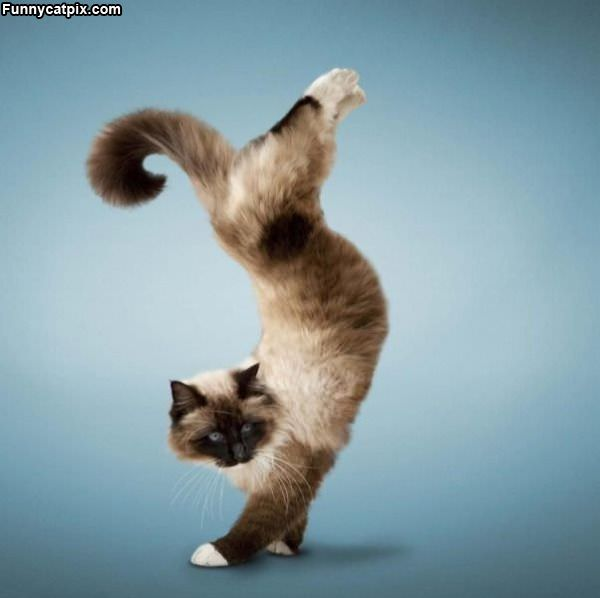 Flippy Cat