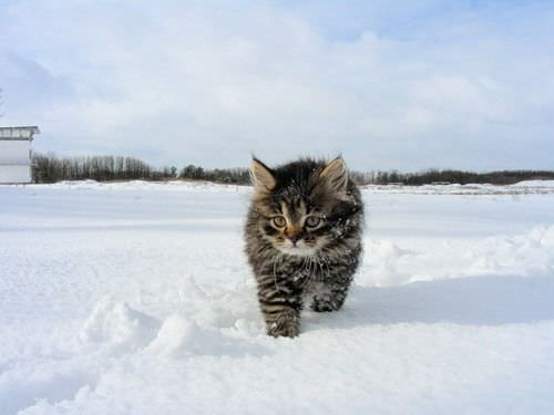Fluff Ball In The Snow