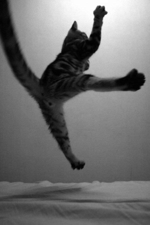Flying Attack Cat