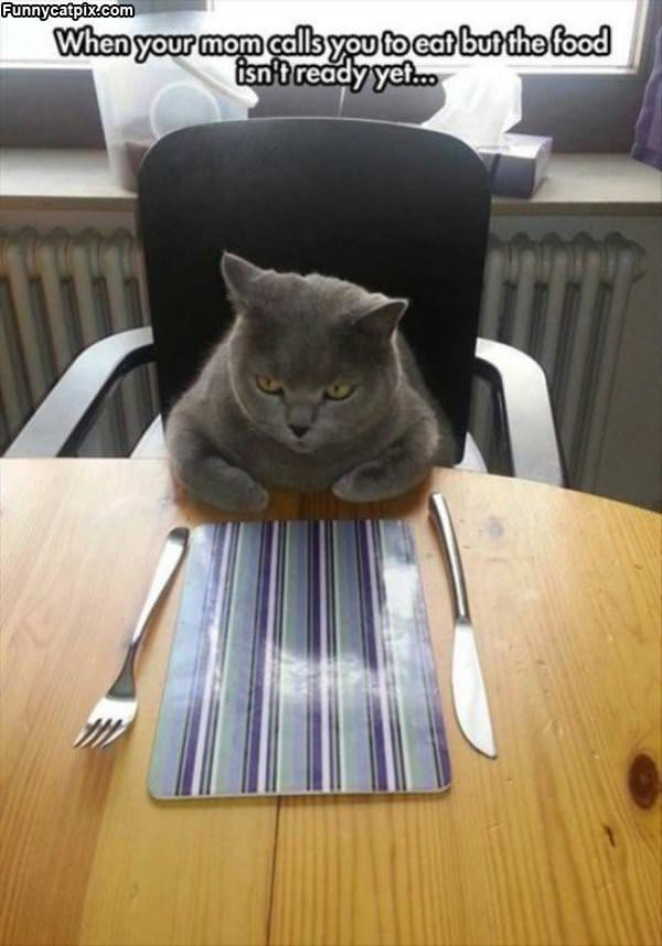 Foods Not Ready Yet