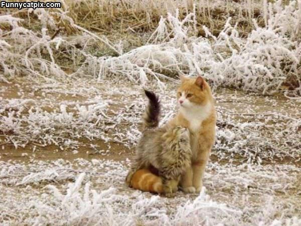 Frisky Cats