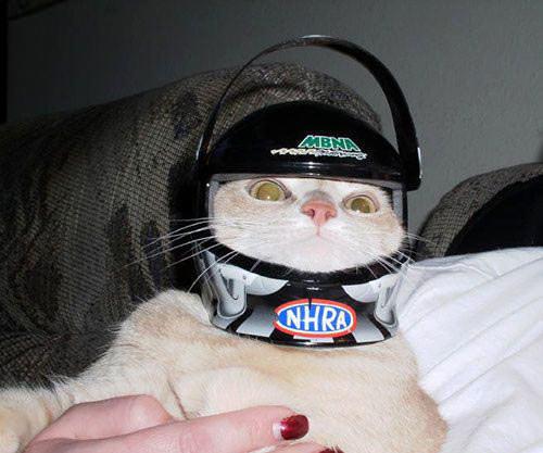 funny_helmet_cat.jpg