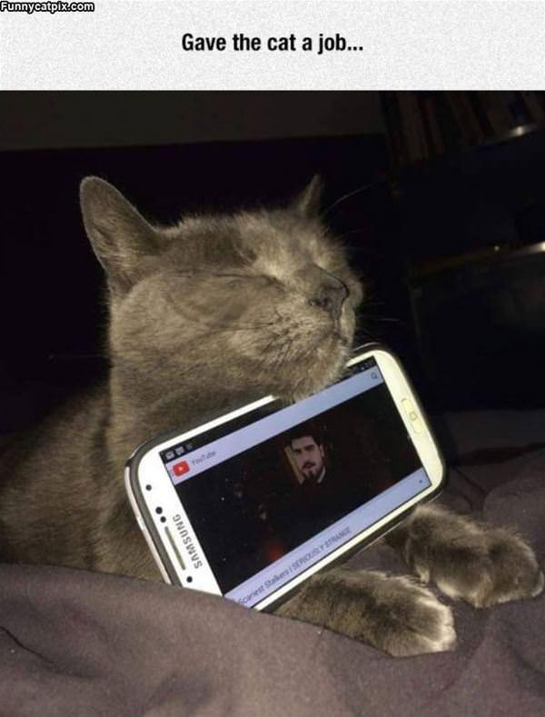 Gave The Cat A Job