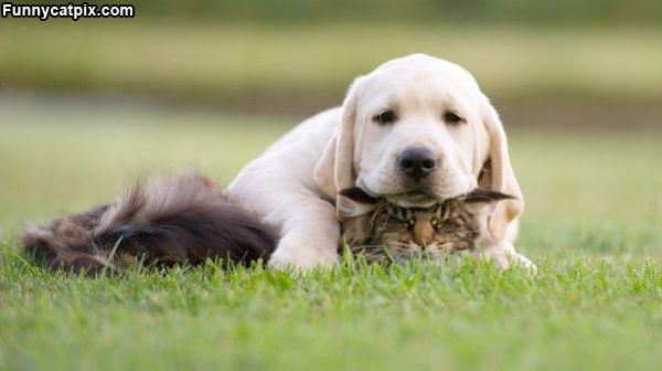 Get Off Me Dog