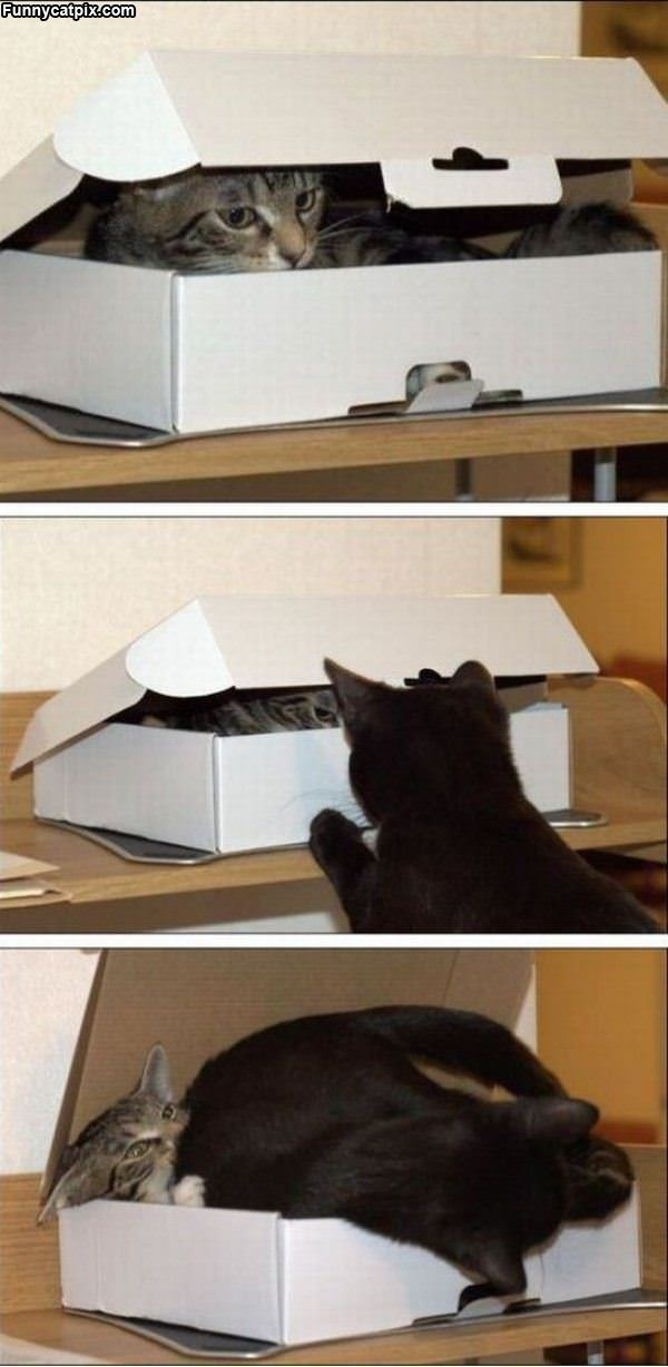 Get Out Its My Box
