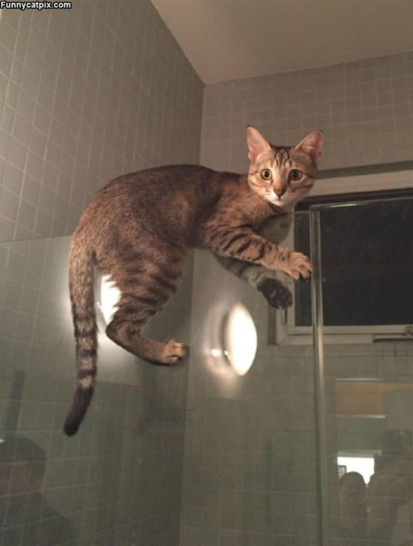 Getting In For A Shower