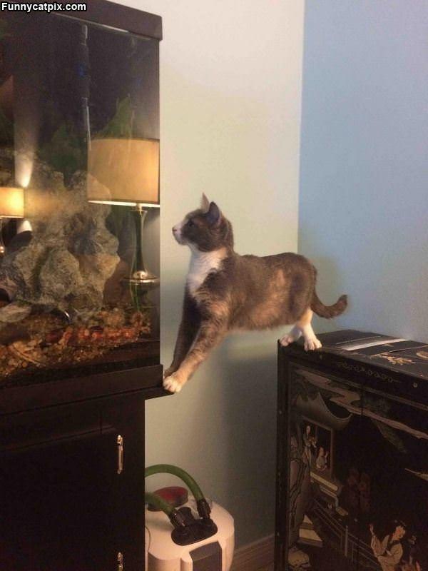 Getting Some Balance