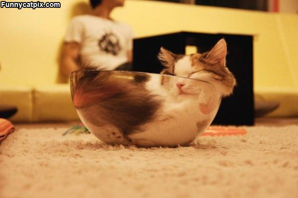 Glass Bowl Of Cat
