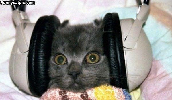 Good Song Cat