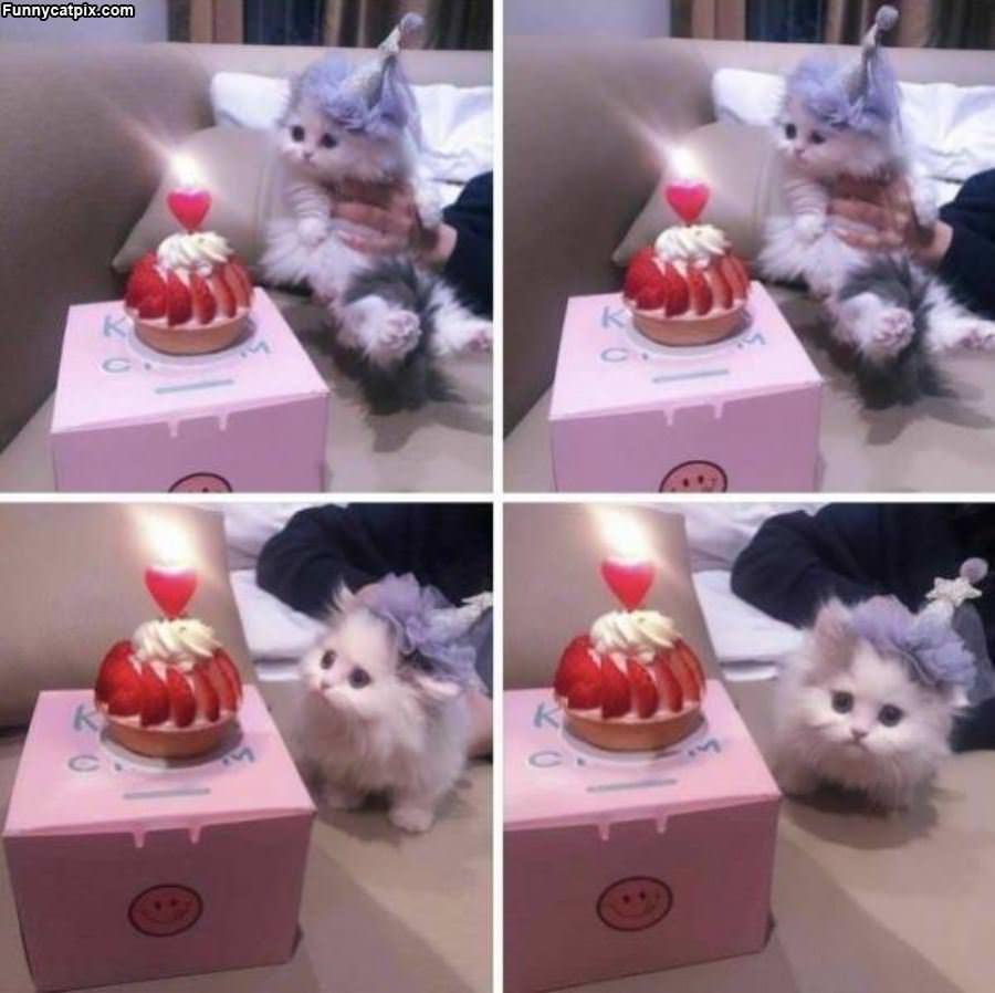 Got A Nice Cake