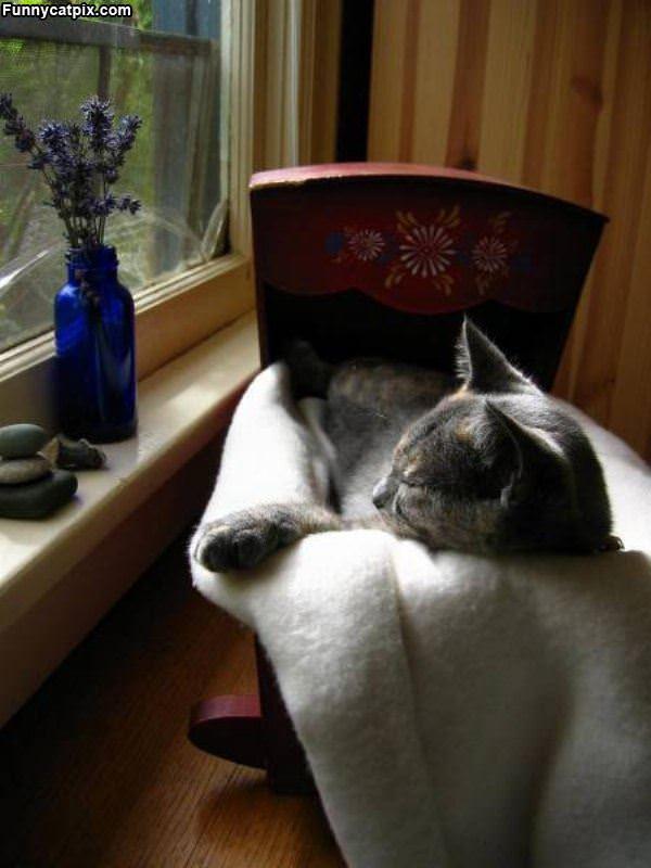Got My Cat Bed