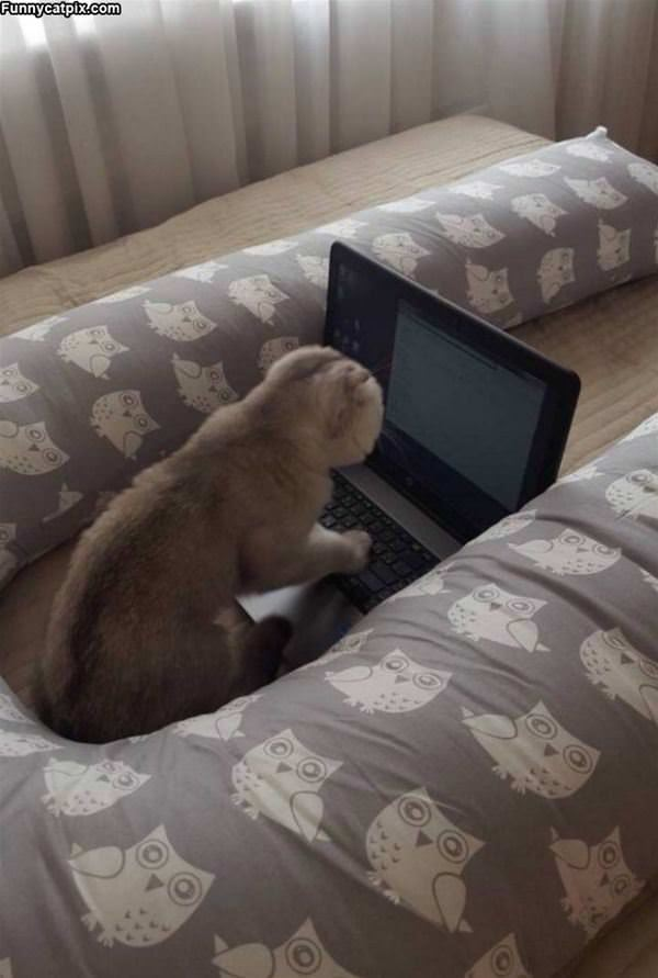Got My Laptop Out