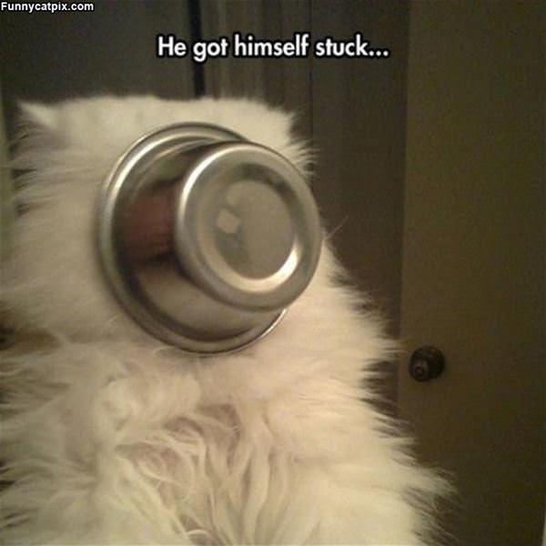 Got Stuck