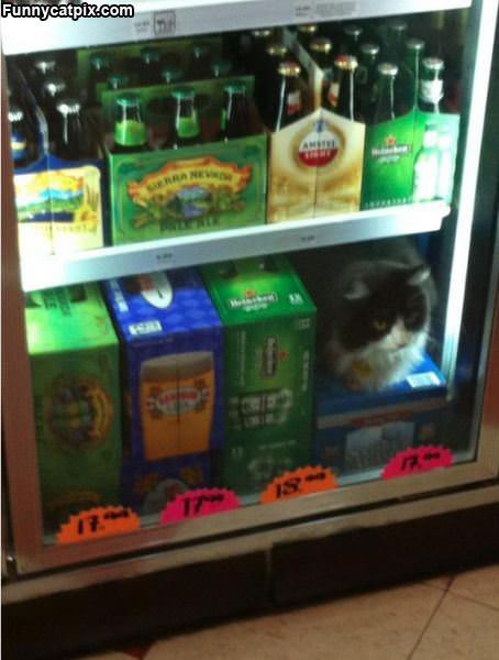 Guarding The Beer