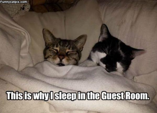 Guest Room Sleeper