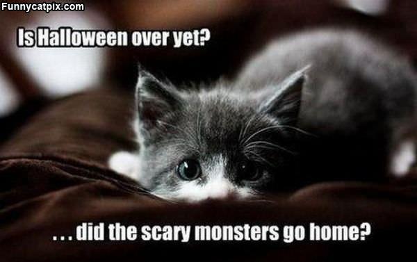 Halloween Over Yet