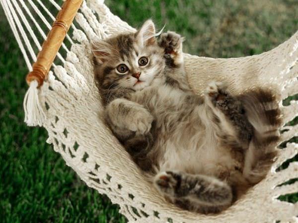 http://www.funnycatpix.com/_pics/Hamoc_Kitten.jpg