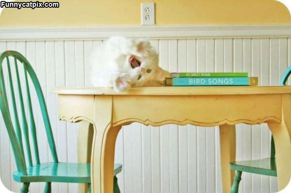 Hanging On The Table