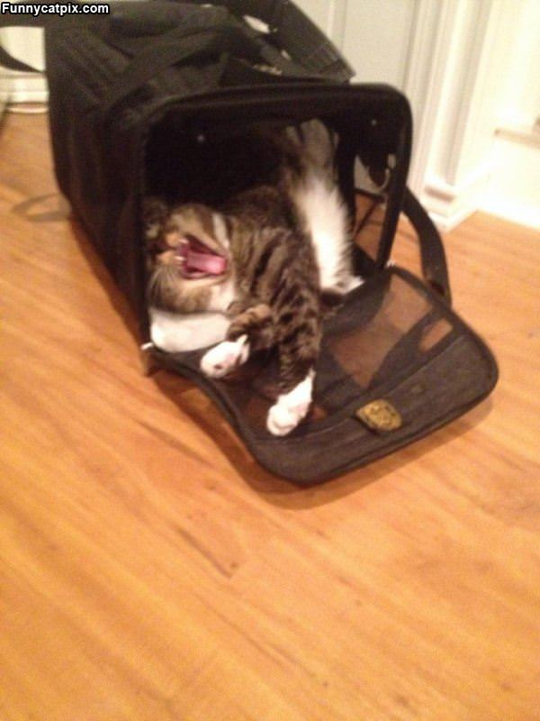 Hanging Out In My Bag